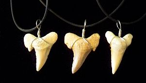 Fossil Shark Tooth Necklace-morocco shark tooth necklace large fossil extinct