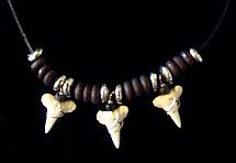 3 Shark Teeth with Brown Beads