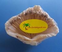 Shell Toothpicks & Holder